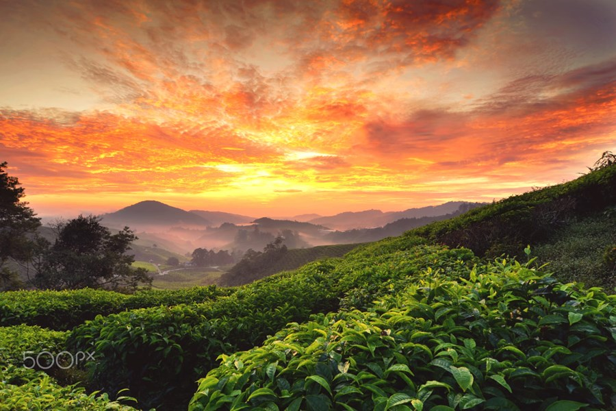 Ipoh 3 Days 2 Nights from Kuala Lumpur with 1 Day to Cameron Highlands