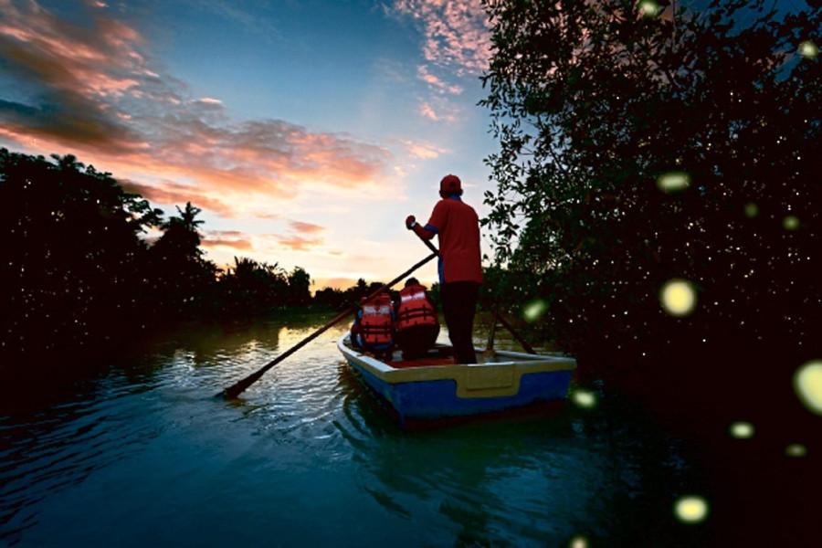 Kuala Selangor Fireflies Day Tour