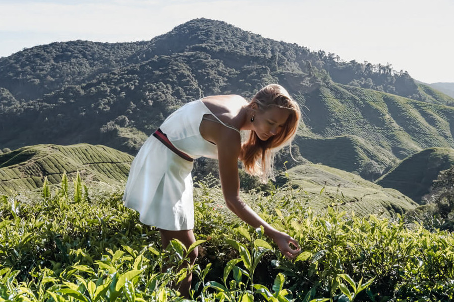 2 Days 1 Night Cameron Highlands Package