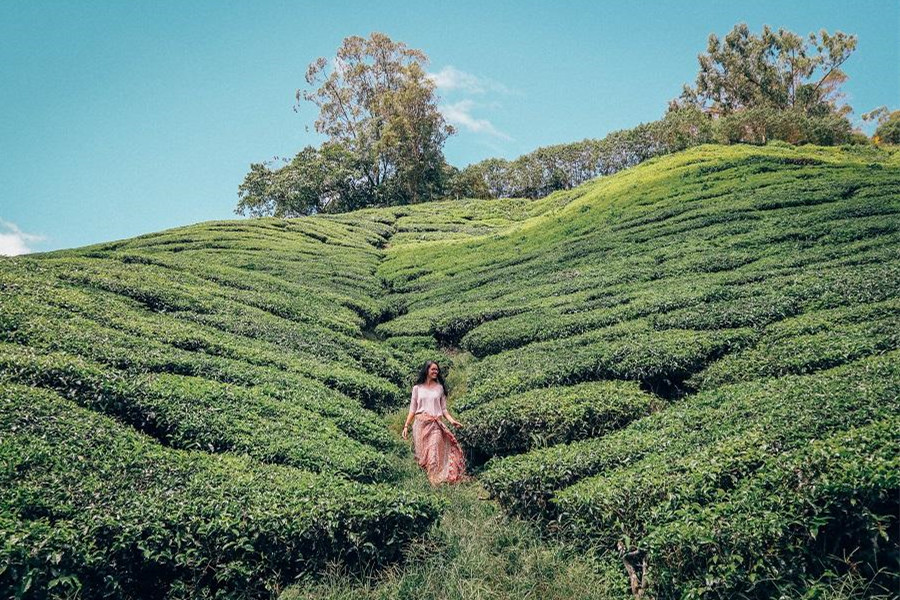 Cameron Highlands Day Trip from Kuala Lumpur | Cameron Highlands Tour Package