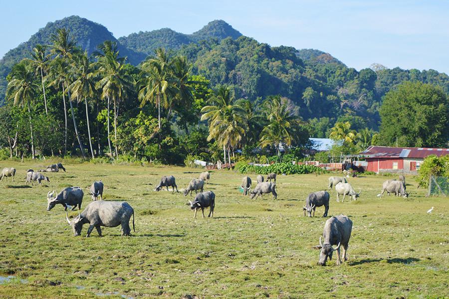 One Day Tour to Pulau Tuba Island Langkawi